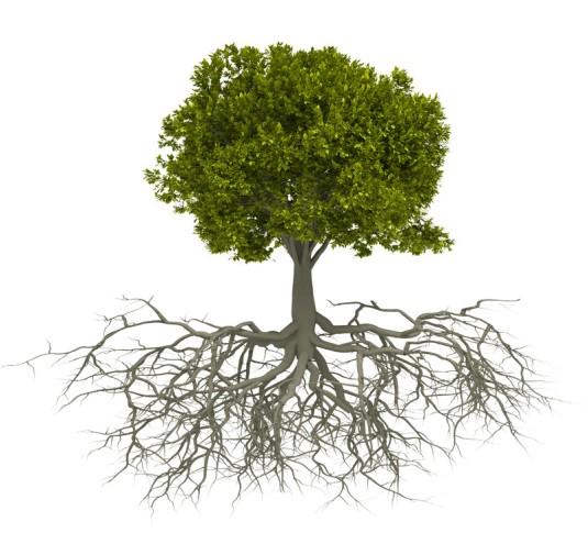 1Tree Roots