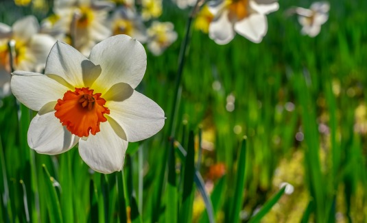spring2_Image by Couleur from Pixabay